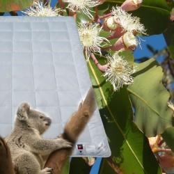 Eucalyptus Airfresh...
